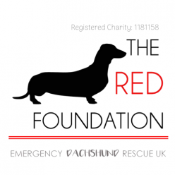The Red Foundation